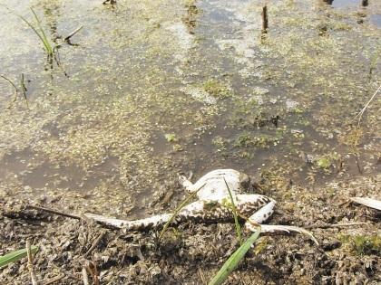 Рыба в местной речке появится лишь через 4 года