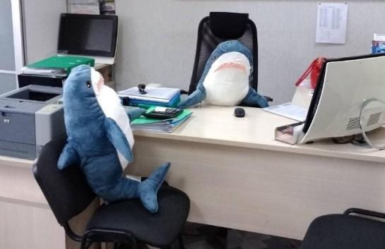 тольятти фото акула из Ikea стала самой популярной взрослой