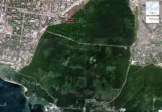 Карта вырубленного леса